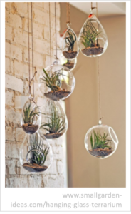 plant art terrarium_3D wall art_interior design tucson_tde